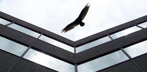 bird flying near windows