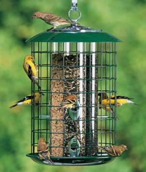types of squirrel proof bird feeders backyard chirper